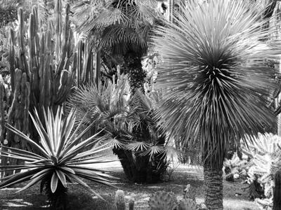 Jardin Majorelle I